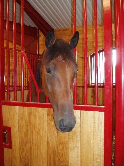 Hästen Hästen